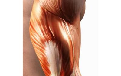 Kodėl auga raumenys? I dalis - stimulai